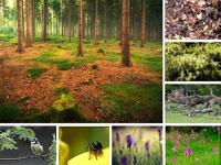 Waldboden Elemente