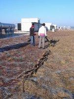 Wooden line/fence test